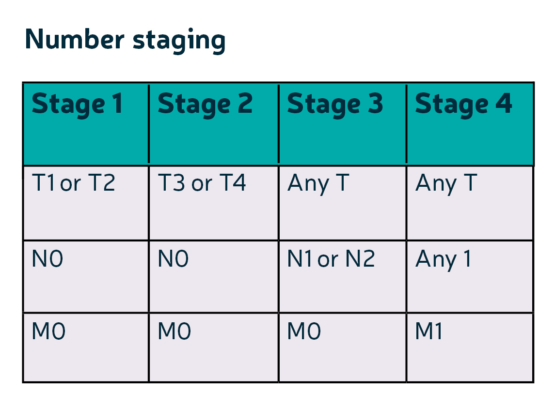 Staging Grading Diagnosis About Bowel Cancer Bowel Cancer Uk
